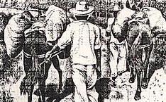Tropeiros carregavam ouro e outras mercadorias até o Porto de Pilar